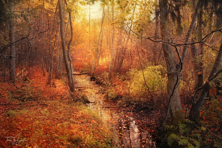 october_forest_by_pajunen_d9drzg4-fullview